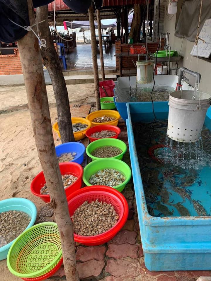 Quán Cây Dương Hồ Tràm - Địa điểm ăn uống ngon tại Vũng Tàu 8