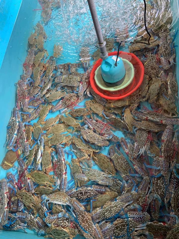 Quán Cây Dương Hồ Tràm - Địa điểm ăn uống ngon tại Vũng Tàu 9
