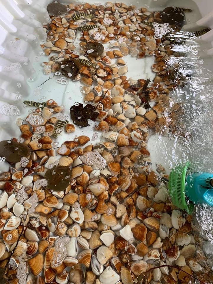 Quán Cây Dương Hồ Tràm - Địa điểm ăn uống ngon tại Vũng Tàu 13